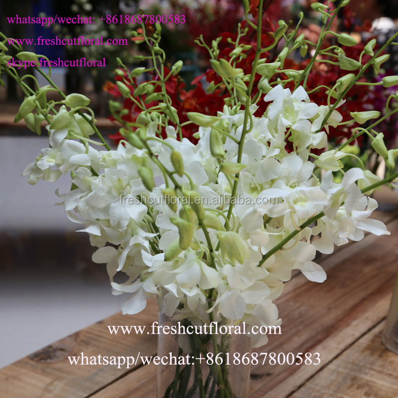 Freshcutfloral Is Alibaba Best Wholesale Orchid Flower Information