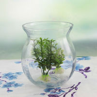 Big Clear Glass Flower Pot Skype Jar Shape ,for Home Decoration Glass Plant Terrarium