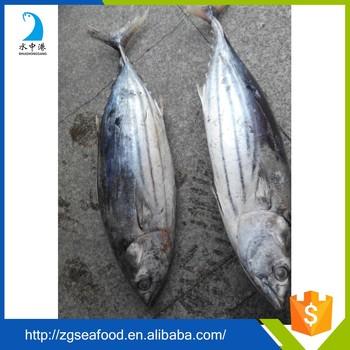 Delicious frozen tuna fish price buy frozen fish frozen for Tuna fish price