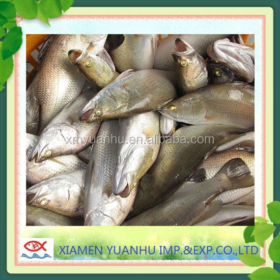 Frozen Nile Perch Fish Exporters