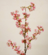 Real Touch Japanese Cherry Blossom artificial sakura flower