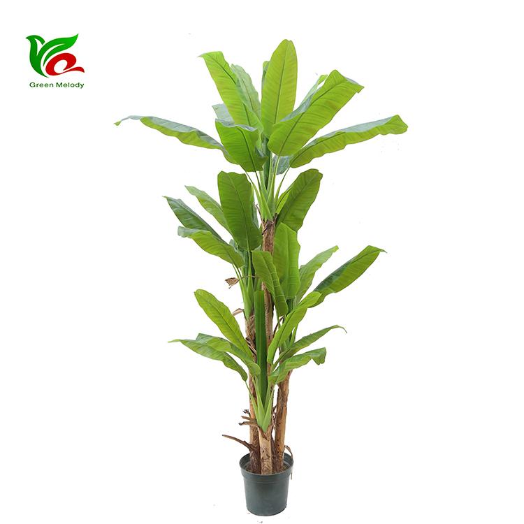 Planta Artificial China Decorativo Grande Artificiales árbol De Banana Buy árbol De Plátano Artificialdecorativo Hacer árbol De Plátano