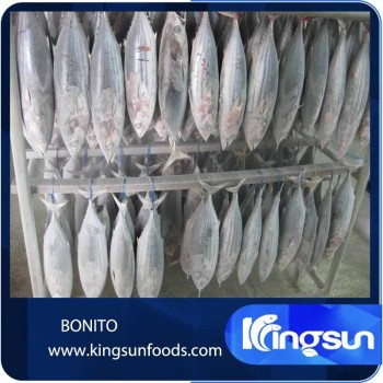 Hot sale frozen bonito fish tuna buy dried bonito flakes for Whole foods fish on sale this week