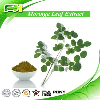 For Sale Moringa Oleifera Leaf Powder,Moringa Oleifera Powder ...