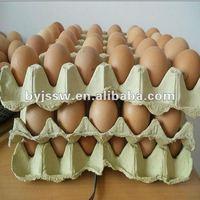 Recycle Paper Egg Carton