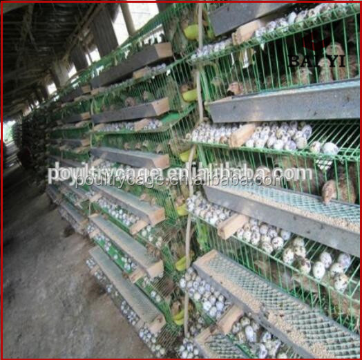 Large Scale Broiler Quail Breeding Cages / Clear Plastic Egg Tray