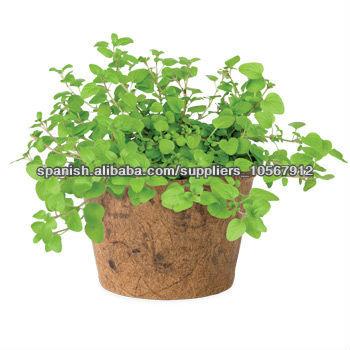 coco macetas de fibra de coco para plantas-maceteros para flores