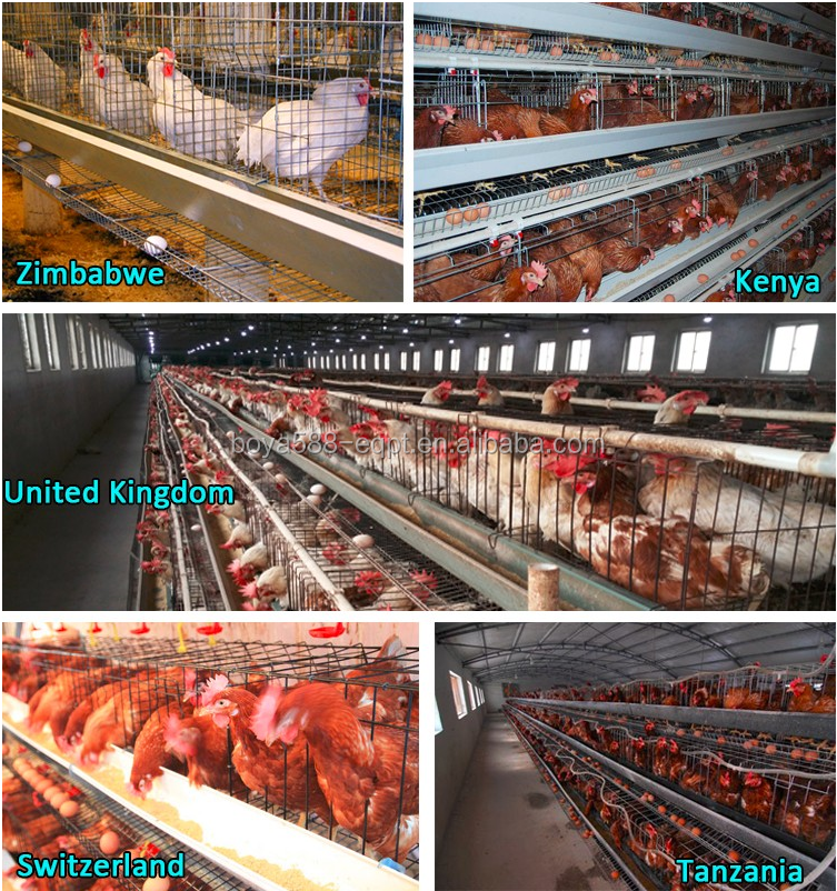 Good Price Automatic Egg Layer Chicken Farm Laying Hens Poultry Battery Cages for Sale