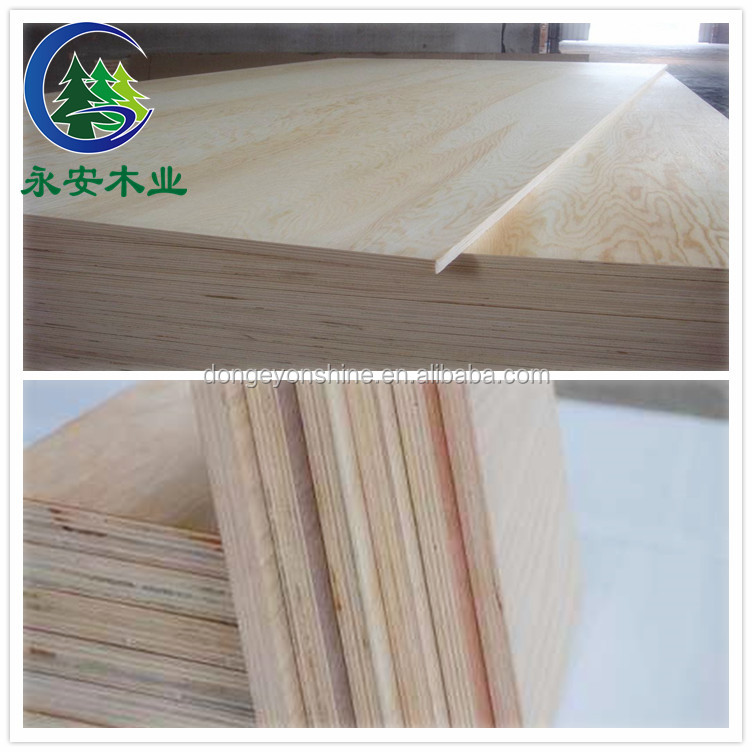 High bending strong poplar pine plywood / lvl timber for sale