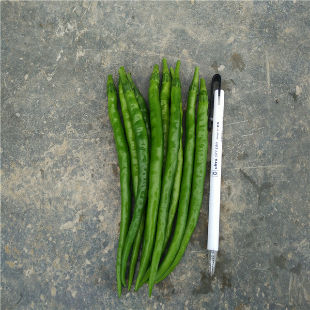Suntoday Asian vegetable <strong>plant</strong> <strong>seed</strong> green online <strong>pepper</strong> chilli <strong>seeds</strong>