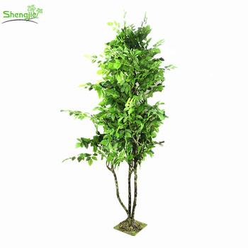 Price Ornamental Plants Outdoor