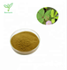 Factory Supply Sensitive Plant Mimosa Hostilis Root Bark Extract Powder