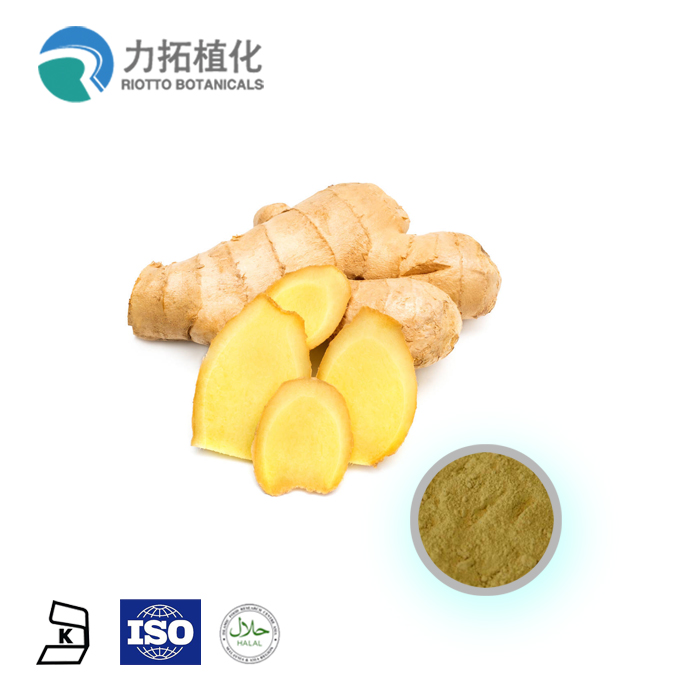 Factory Direct Supply Natural 초본 식물 유기 ginger root 추출물