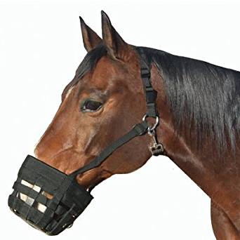 Best Friend Nylon Halter Grazing Muzzle Pony