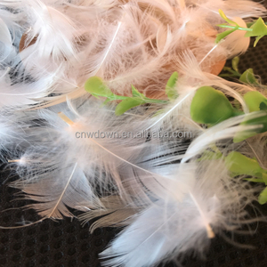 High Quality Washed White Duck Down rooster ostrich feather for Sale