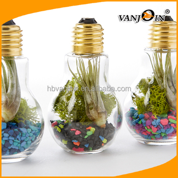 Plastic Light Bulb Terrarium Plants Container With Breath Hole Buy