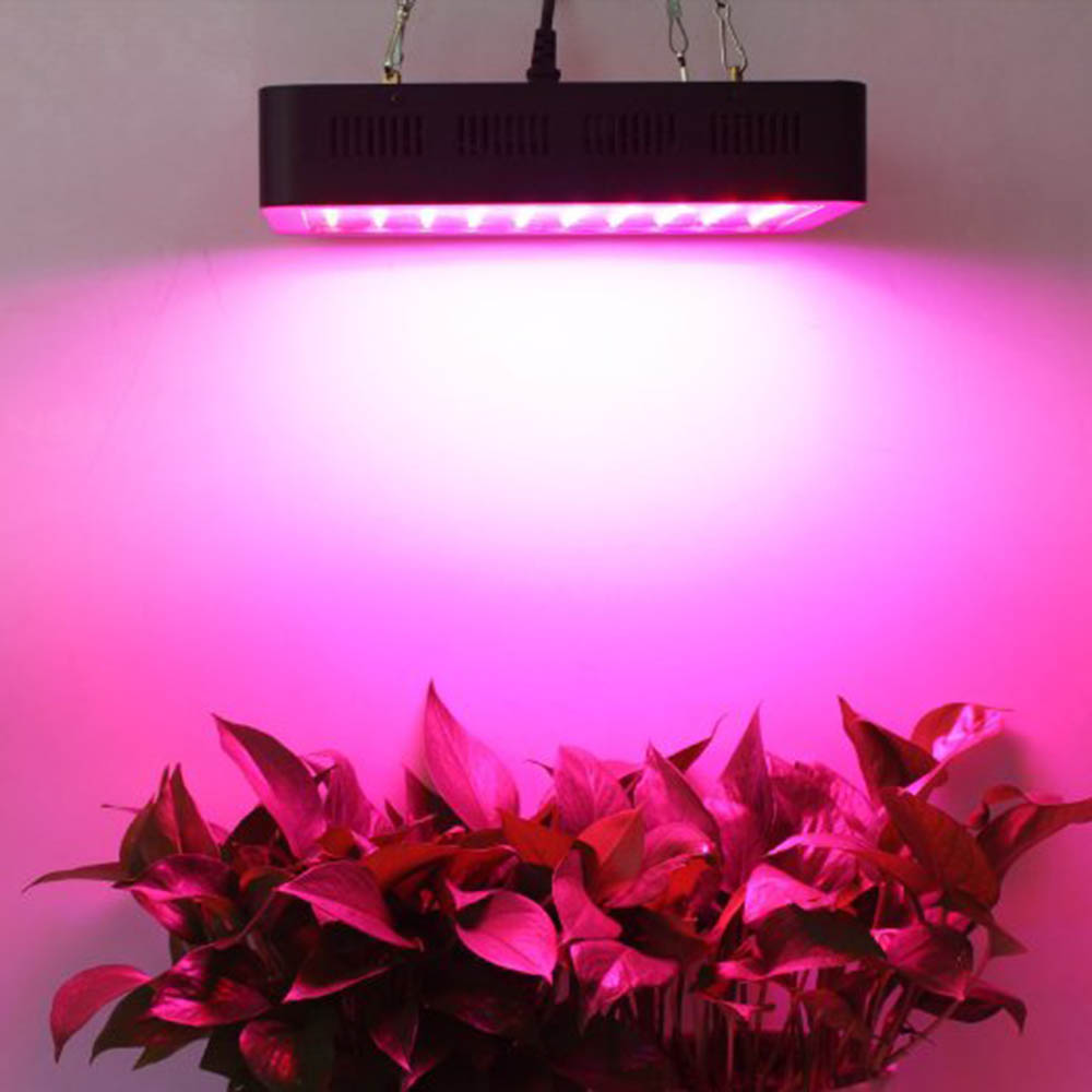 Greenhouse And Indoor Medical Plant Growing 5W Chips Full Spectrum LED Grow Light 1000W
