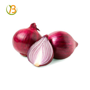 fresh onion export to dubai fresh rate/search onion importer in vietnam