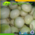 available for sale Fresh white onions