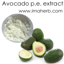 Bulk Supply 20:1 Avocado P.E. / Persea Americana P.E.