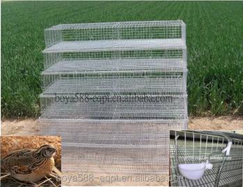 Quail Farming Equipment Export To Kenya - Buy Quail ...