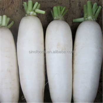 bai luo bo zhongzi vegetable seed hot sell popular white radish seed