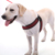 No-Pull  Breathable Adjustable large dog harness for Outdoor Walking