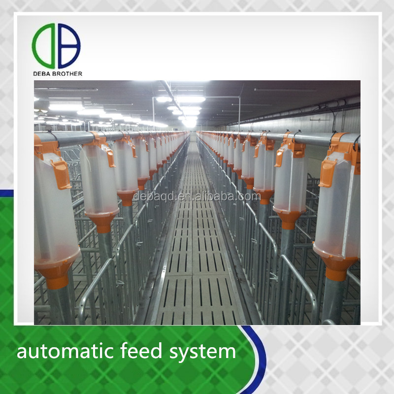 Modern pig farm saving time and labor cost finishing stall automatic feed system