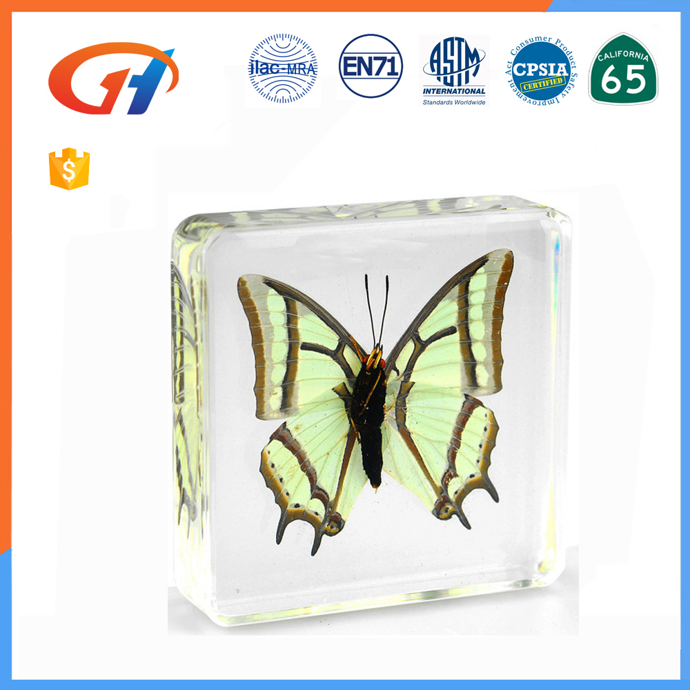 Cheap insect specimen transparent acrylic paperweight bulk custom
