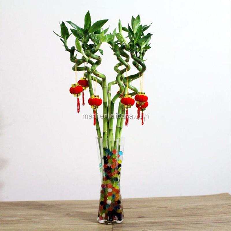 Int rieur plante de bambou plantes aquatiques id de for Plante western
