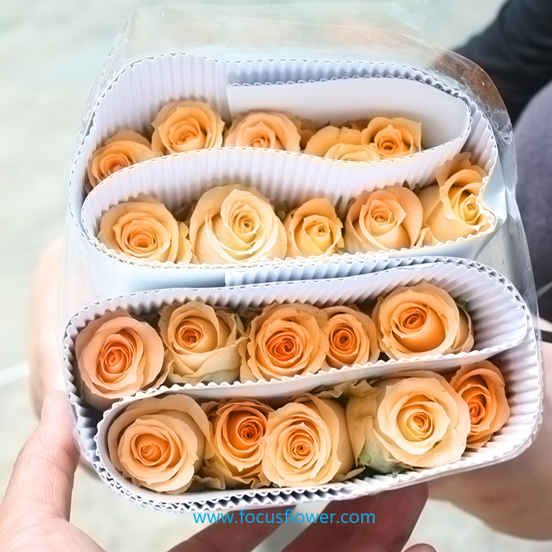 Fresh Cut Flowers Colombia Wholesale Preserved Roses Fresh Roses ...