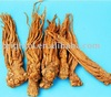 High quality Angelica Extract
