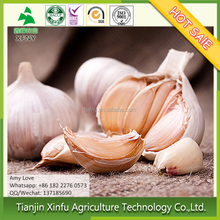 Factory price picked fresh white garlic