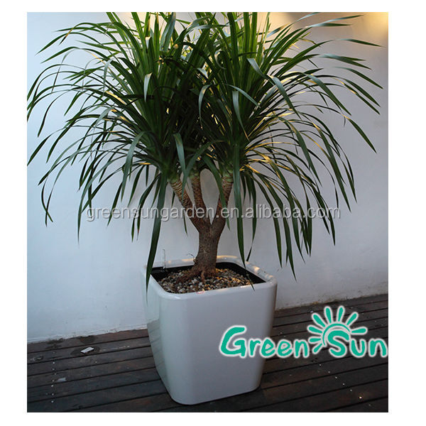 regenf lle moderne dekorative gartenblumen hydrokultur indoor t pfe f r orchideen blumentopf und. Black Bedroom Furniture Sets. Home Design Ideas