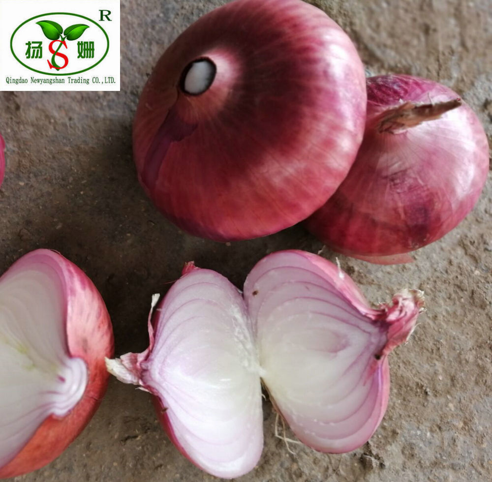 China's new crop: Fresh Onions:export dubai/India/Europe and the United  States, etc