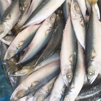 Whole Round Atlantic Herring Fish Frozen High Quality Pacific Mackerel Fish Buy Atlantic Mackerel Fish Atlantic Herring Fish Atlantic Mackerel