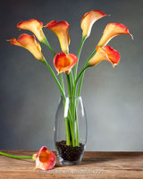 Calla Lily Flower Stem china artificial flower stem
