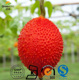 Manufacturer Supply Natural Gac Fruit Extract
