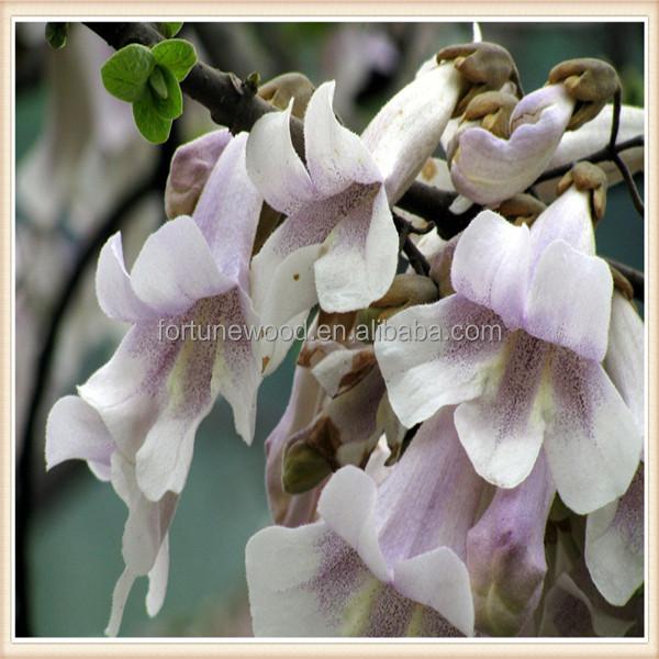 Top germination rate Paulownia Elongata seeds for sale