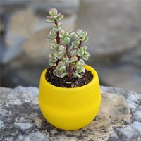 Disassembly Combination Plastic Mini Plant Flower Pot
