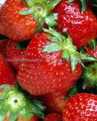 STRAWBERRY SCENT FOR FRAGRANCES