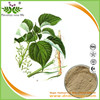 Wholesale price nettle root extract, nettle leaf tea with free sample