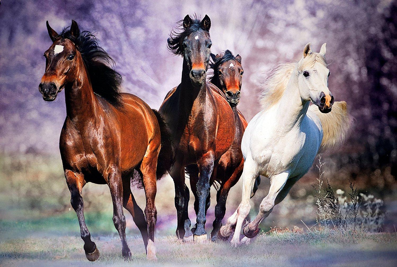 Красивые открытки лошади