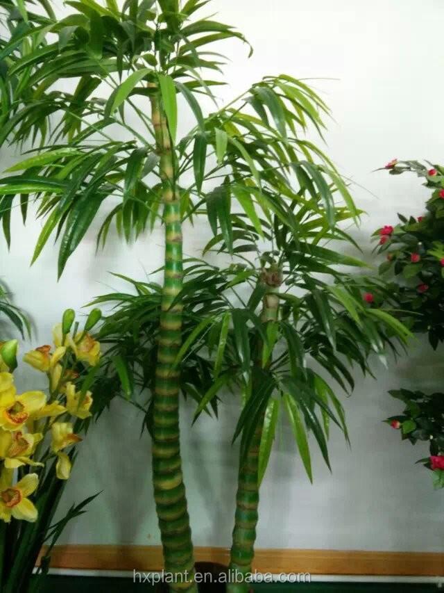 Hx paysage bambou simulation bambou bambous plante faux for Faux bambou
