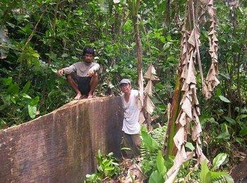Philippine Iroonwood Magkono Buy Hardwood Product On