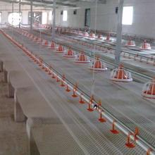 Automatic poultry equipment for farm house ground floor feeding line chicken Feed System