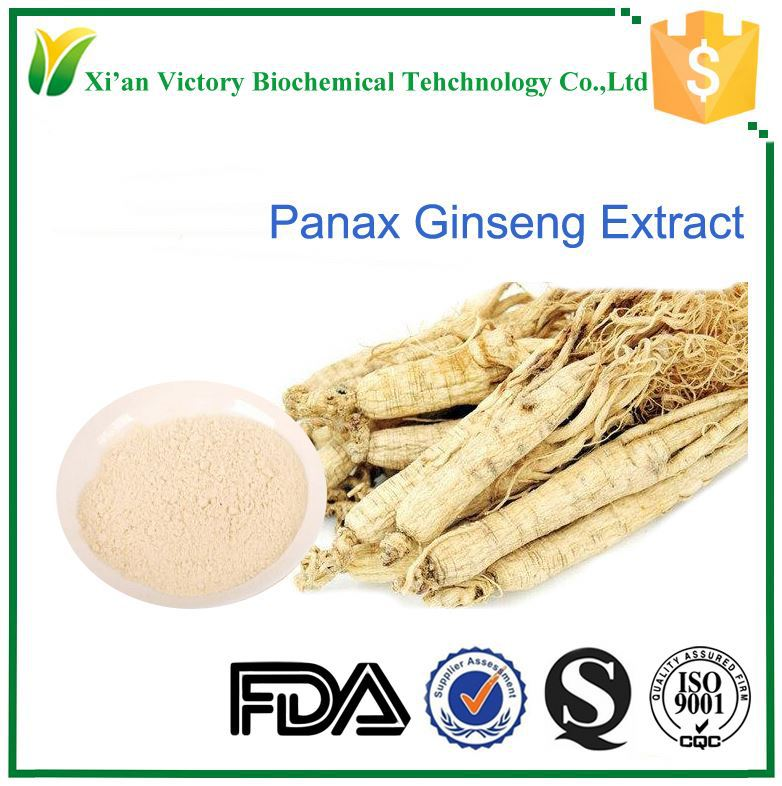 ginsenosides panax ginseng extract herb extract ginseng