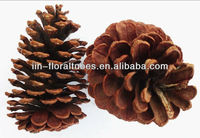 Natural pine cone for christmas deco