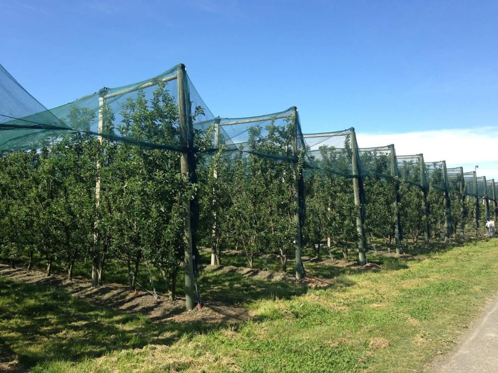 Plant Supply Car Hail Protection Anti-hail Net Covers / Agricultural Apple  Tree Anti Hail Netting, View hail net, AINING Product Details from Hebei