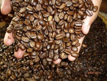 Original Gayo Arabica Luwak / Civet Coffee Premium - Buy ...